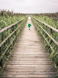 toddler walking on bridge near corn field during daytime