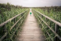 toddler walking on bridge near corn field during daytime